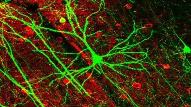 neurons kSSG 620x349abc